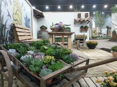 Tuinidee: Oude melkkar gebruiken om mooie succulenten te presenteren
