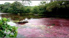 caño cristales hermoso paisaje colombiano Landscape Wallpapers, Country Roads, River, Outdoor, Zen, Facebook, Beautiful Landscapes, Venezuela, Cities