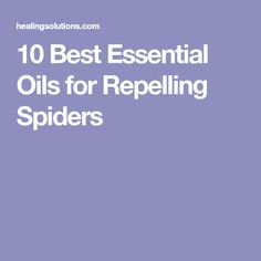 10 Best Essential Oils for Repelling Spiders
