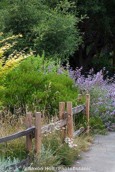 california native garden