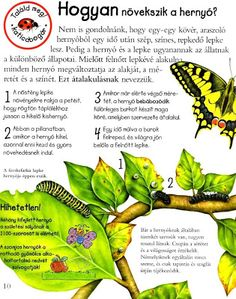 Picasa Webalbumok Insect Crafts, Crafts For Kids, Environment, Science, School, Picasa, Creative, Crafts For Toddlers, Bug Crafts