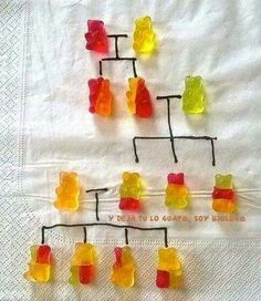 Genetics with gummy bears