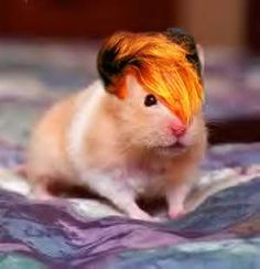additionally - hamsters & wigs