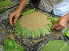 How Do You Make Hypertufa   Lois paid special attention to arranging the fine-leaves creating a ...