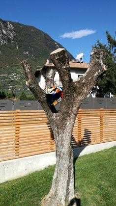 Italien Trip Trunks, Plants, Pictures, Tours, Italy, Drift Wood, Flora, Plant, Planting