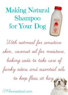 Do you have a stinky pup? With oatmeal for sensitive skin, coconut oil for moisture, baking soda for funky odors, and essential oils to keep fleas at bay, you'll love this natural DIY dog shampoo.: