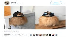 20 Animal Tweets That Made Us Laugh Last Week ( May 13th, 2018)