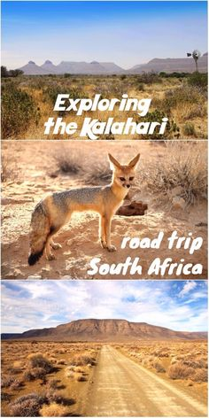 Complete road trip itinerary for the Kalahari region in South Africa, including Kgalagadi Transfrontier park. Camping/safari trip through the Northern Cape. Road Trip Map, Road Trips, South Africa Safari, Beautiful Places To Visit, Africa Travel, Cape Town, Trip Planning, Adventure Travel, Travel Inspiration
