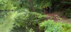 Waldschluchtenweg: Der Weg führt an einem kleinen See vorbei 11,5km; 3:30hrs