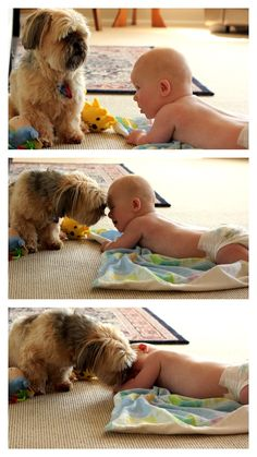 Our shi-tzu kissing our baby!