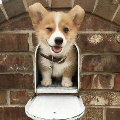 Oh just waiting for the mailman lol