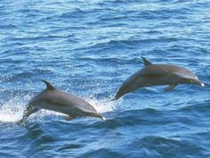 Virginia Beach is a great family vacaion destination...watched dolphins right from the shore.