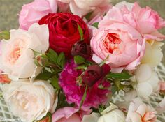 Valbonsky roses, the Pink elegy, the French bouquet, English roses - http://blogs.privet.ru/community/magic_flowers/82099258 - Английские розы - ЛЕПЕСТОК