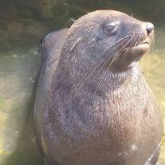 Our friendly seal who kept us company #fishing #portfairy #boatramp #awesometimes by tashieann http://ift.tt/1UokfWI