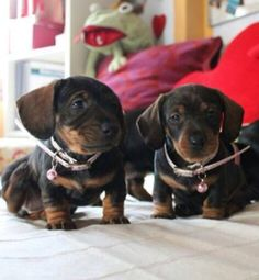 ❤️O. M. Goodness - double the sweetness!