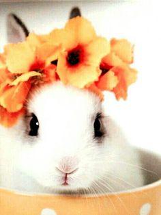 Spring ❤
