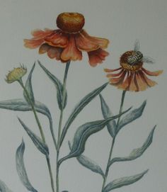 Cath Hodsman, British Wildlife and Natural History Artist Botanical Drawings, Botanical Illustration, Botanical Prints, Illustration Art, Creepy Tattoos, British Wildlife, Nature Prints, Fauna, Art Techniques
