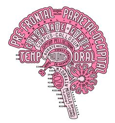 Uploaded by Find images and videos about brain, medicine and medicina on We Heart It - the app to get lost in what you love. Brain Anatomy, Medical Anatomy, Anatomy And Physiology, Human Anatomy, Anatomy Art, Medical Students, Medical School, Nursing Students, Nursing Schools