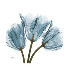 Tulips in Blue Art Print by Albert Koetsier Framed Art Prints, Wall Art Prints, Framed Wall, Canvas Prints, Blue Framed Art, Blue Tulips, Blue Poster, Kunst Poster, Botanical Art