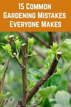15 Common Gardening Mistakes Everyone Makes