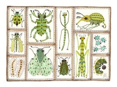 I Love Insect Art  Beetles Weevils Flies No 15 original watercolor by GollyBard, $185.00