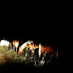 Caballos iluminados