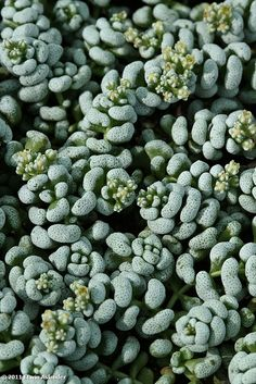 Amazing Unusual Plants To Grow In Your Garden Cool Succulents, Types Of Succulents, Planting Succulents, Planting Flowers, Unusual Plants, Rare Plants, Cactus Plants, Crassula Succulent, Succulent Bonsai