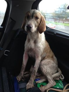 PLEASE SHAREYesterday this beautiful dog was found running on Llansteffan road between Green Castle Woods and Llangain. He is very gentle. Has slight injury to front leg, and was exhausted. He was took to the vet clinic in Llanllwch. Has no microchip? Hope we can get the owners to see this and get him.