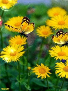 Szeretettel,gif rózsák,gif rózsák,Gif rózsák,For you...gif,Gif virágok,Gif virágok,Gif virágok,gif virágok,gif virágok, - klementinagidro Blogja - Ágai Ágnes versei , Búcsúzás, Buddha idézetek, Bölcs tanácsok , Embernek lenni , Erdély, Fabulák, Különleges házak , Lélekmorzsák I., Virágkoszorúk, Vörösmarty Mihály versei, Zenéről, A Magyar Kultúra Napja-Jan.22, Anthony de Mello, Anyanyelvről-Haza-Szűlőfölről, Arany János művei, Arany-Tóth Katalin, Aranyköpések, Befőzés , Beszéde...