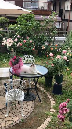 Garden Yard Ideas, Garden Trees, Garden Art, Garden Design, Beautiful Flowers Garden, Beautiful Roses, Painting Patio Furniture, Serenity Garden, Gardening