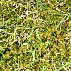 A lawn with grass growing in it.