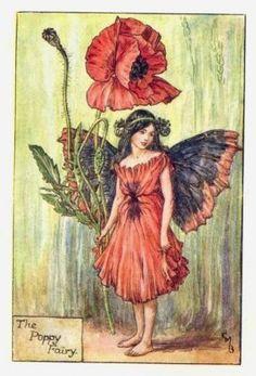 Poppy Flower Fairy Print c.1927 Fairies by Cicely Mary Barker