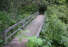 Braille Trail, Latodami Nature Center, North Park, Pittsburgh, Pennsylvania - Hiking Path Footbridges on Waymarking.com