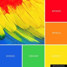 Rainbow | Birds | Parrots |Color Palette Inspiration. | Digital Art Palette And Brand Color Palette.