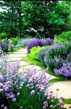 Lavender perfumed pathway...