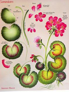 One stroke geranium