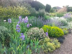 The Beth Chatto Gardens - if you need help to create a free plant border for your garden, just email me: myplantborder@gmail.com