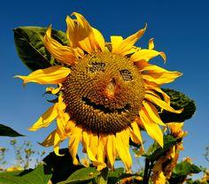"500px / Photo ""Happy Face"" by Andreas Jones"