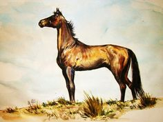 Akhal Teke (Turkmen horse) watercolor