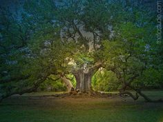 Tree of life by laurel carr-braint