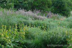 Gallery | Knoll Gardens | Ornamental Grasses and Flowering Perennials
