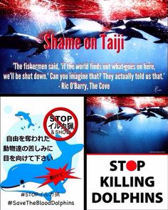 Shame on Taiji- Stop Killing Dolphins