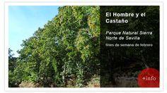 Descubre uno de los senderos de la Sierra Norte de Sevilla que nos lleva hasta un bosque de Castaños. Conoceremos una de las empresas artesanales, el Monasterio de Nuestra Señora de los Ángeles, lugar donde viven Las Jerónimas, fabrican dulces tradicionales y dan alojamiento aquel quiera en una las pocas Hospederías Monásticas de España.  http://www.reservatuvisita.es/pop_actividad.php?id=6629&diadesde=03&mesdesde=02&aniodesde=2015&diahasta=28&meshasta=02&aniohasta=2015