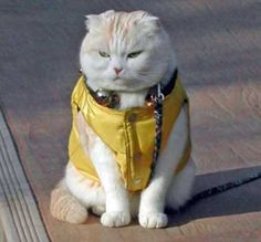 Cool coat for a cool cat.