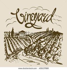 Hand drawn vineyard landscape. Vintage vector illustration.