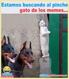 Cool jokes - great jokes to laugh till you drop. Funny Animal Memes, Cute Funny Animals, Funny Memes, Great Jokes, Funny Spanish Memes, Rare Animals, New Memes, Amazing Spiderman, Kawaii Anime