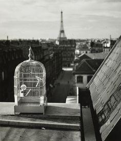 Rue de Vaugirard, Paris, 1931. Andre Kertesz   now on auction at Artcurial