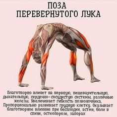 Yin Yoga Posen, Anatomy Models, Yoga Photos, Health And Fitness Articles, Strong Body, Keep Fit, Yoga Lifestyle, Asana, Sport