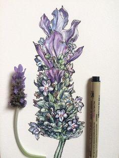 original ink & watercolor by Noel Badges Pugh.