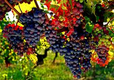 Grapes by Minh Hoang-Cong on 500px
